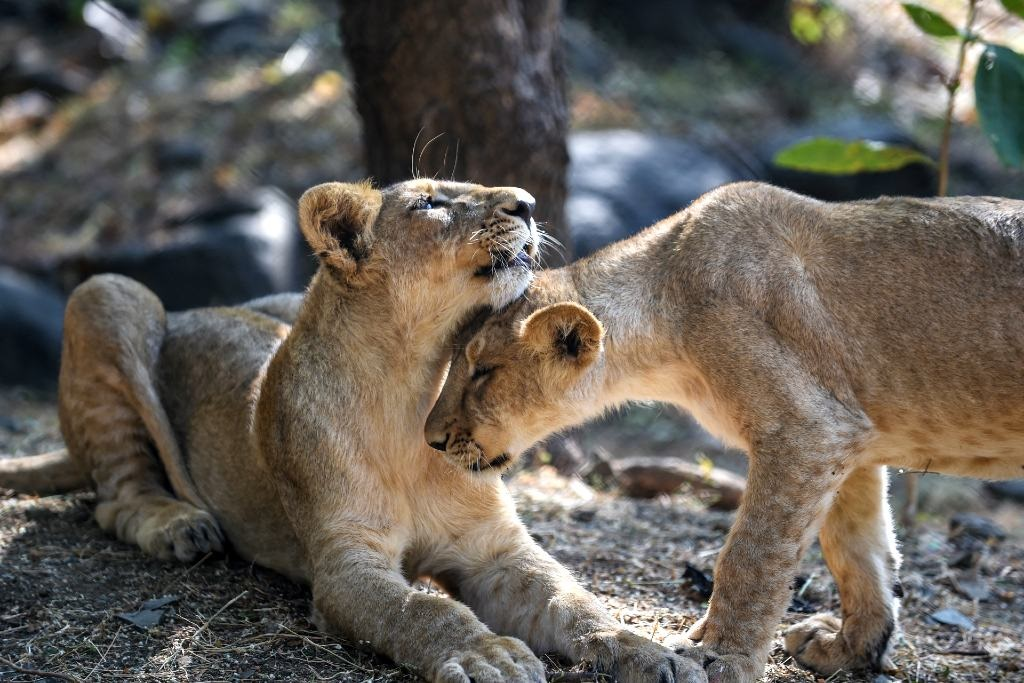 A recent high-level panel report recommends a policy on biodiversity, conservation and sustainable use as well as certain measures to protect some of our iconic species such as lions, elephants, rhino and leopards.
