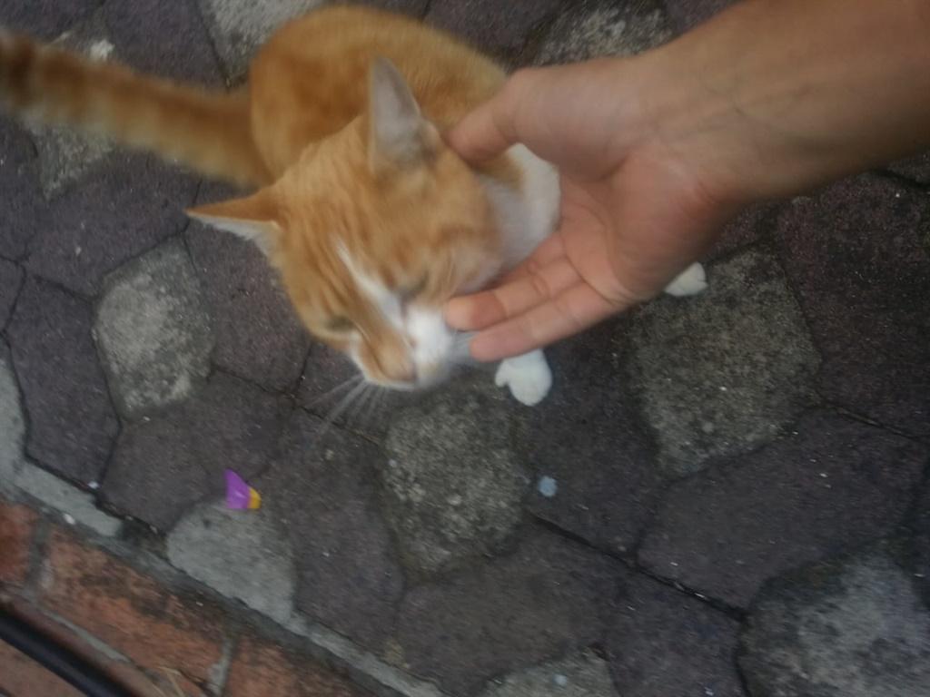 Fred, die rondlopergemmerkat, soek net 'n bietjie