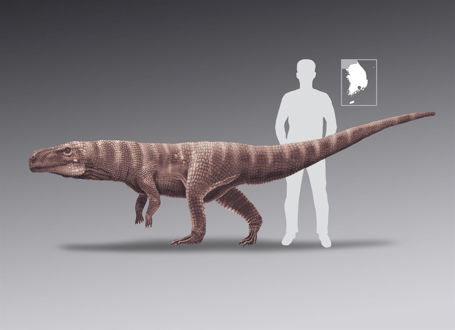 'Tight-rope walking' croc may have stood on two legs
