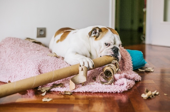 Dog at home alone. (Photo: Getty Images)