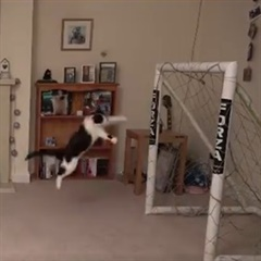 WATCH | Cat named 'Meownuel Neuer' pulls off series of saves in today's must-watch video! - Sport24