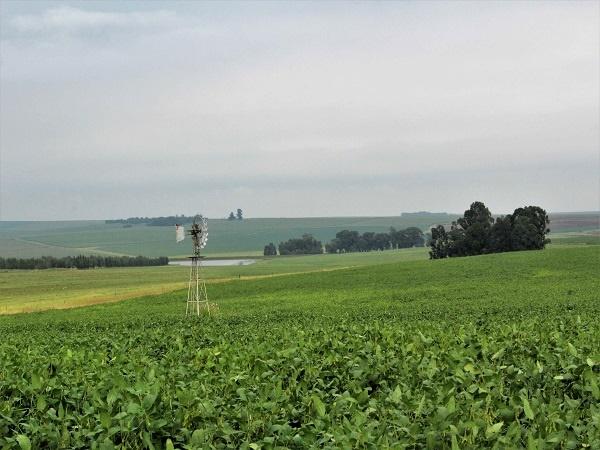 sojabone, landskap, windpomp,