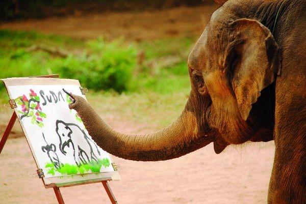 Suda die olifant verf 'n prentjie by die Mae Taeng