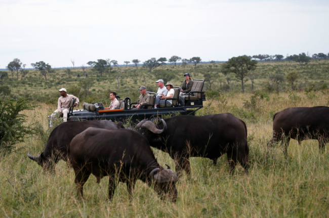 Tourists are seen at a Safari watching a herd of buffaloes at a game reserve adjacent to the world-renowned Kruger National Park in Mpumalanga province in 2019.