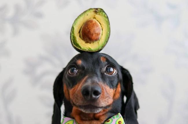 (Photo: Instagram/@harlso_the_balancing_hound)