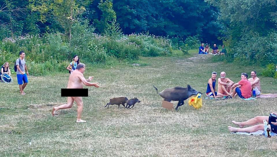 A nudist chased after wild boars who took his bag with his laptop in it. (Facebook, Adele Landauer)