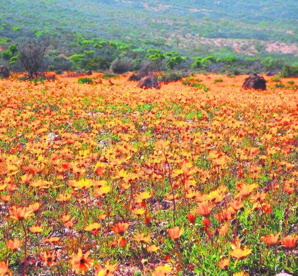 Namaqua National