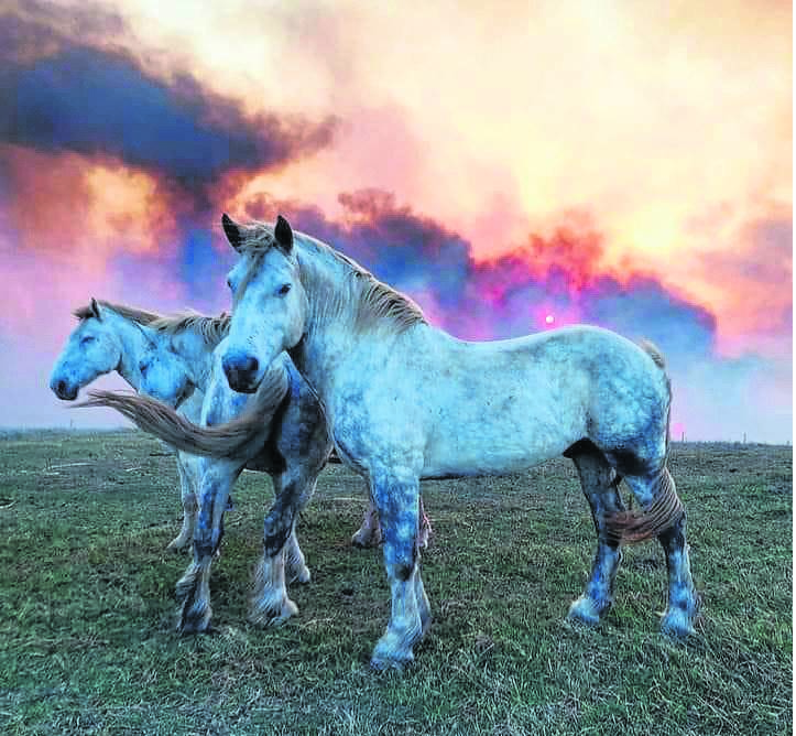 Gwahumbe Game Reserve and Spa resident game ranger Charles Flick, amid a massive runaway fire in Mid-Illovo, Eston and Gwahumbe on Sunday, managed to take this photograph of horses being moved away from the fast-approaching blaze. PHOTO: Charles Flick