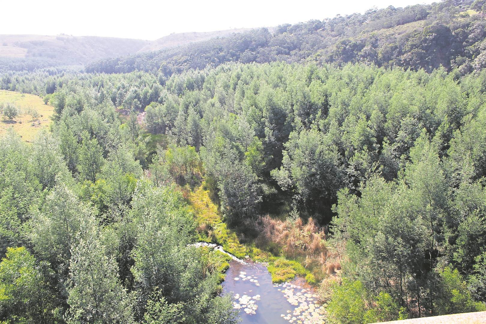 The picturesque Krom River is surrounded by invasive alien plants.                                        (Photo: supplied)