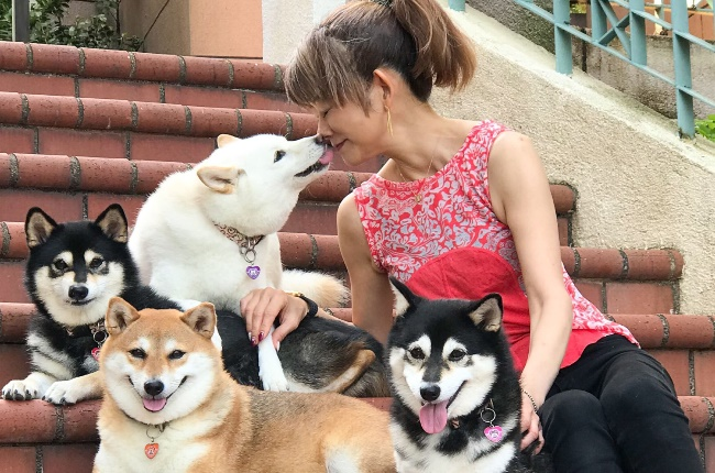 Yoko and her pooches