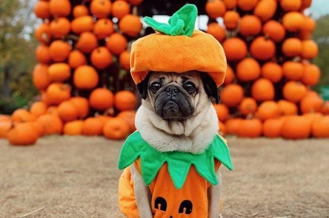 Doug the Pug - the coolest dog-fluencer out there! (PHOTO: INSTAGRAM/@ITSDOUGTHEPUG)