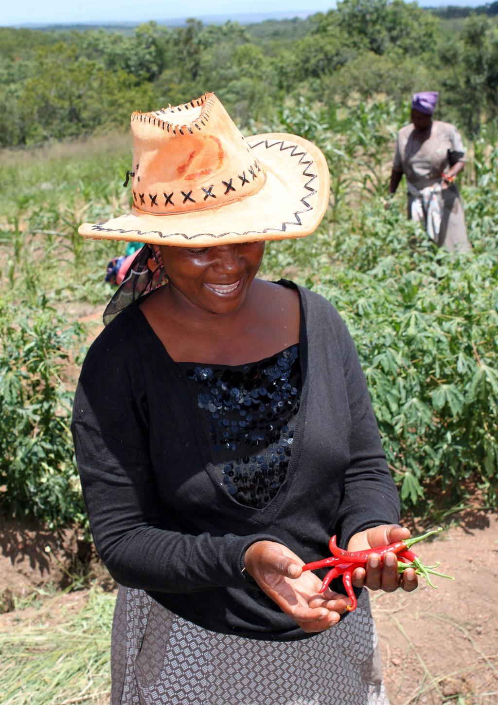 Source Black Mamba Foods.