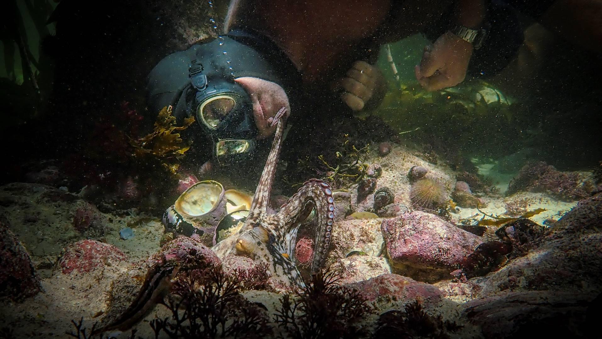 Die seekat steek een van sy pote uit na Craig Foster, vervaardiger van die dokumentêr 'My Octopus Teacher'. Foto: Netflix