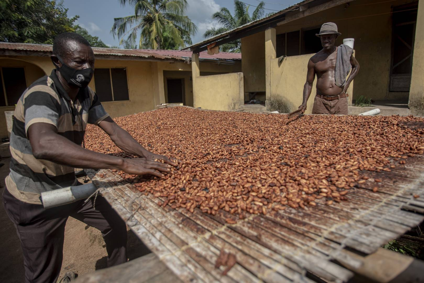 Cocoa farmers spread cocoa beans during the sun-drying process in Asikasu, Ghana. Farmers are battling to get he prices they are asking for the produce. Picture: Getty Images