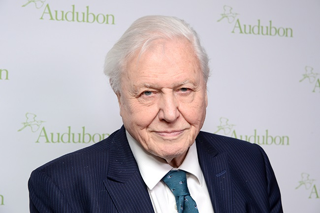 Sir David Attenborough to present BBC Earth's A Perfect Planet. (Photo by Andrew Toth/Getty Images)