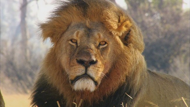 Cecil: The Legacy of a King. (Photo: Aquavision Television Productions)
