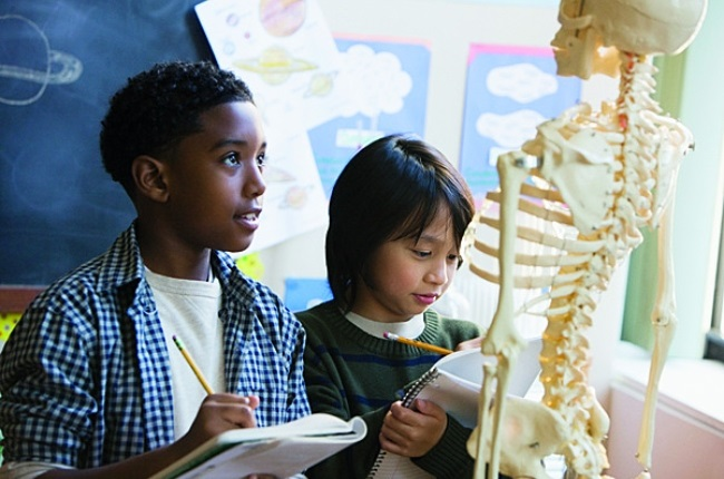 The human skeletons provides structure to the human body, enabling movement (Photo: Getty Images/Gallo Images)