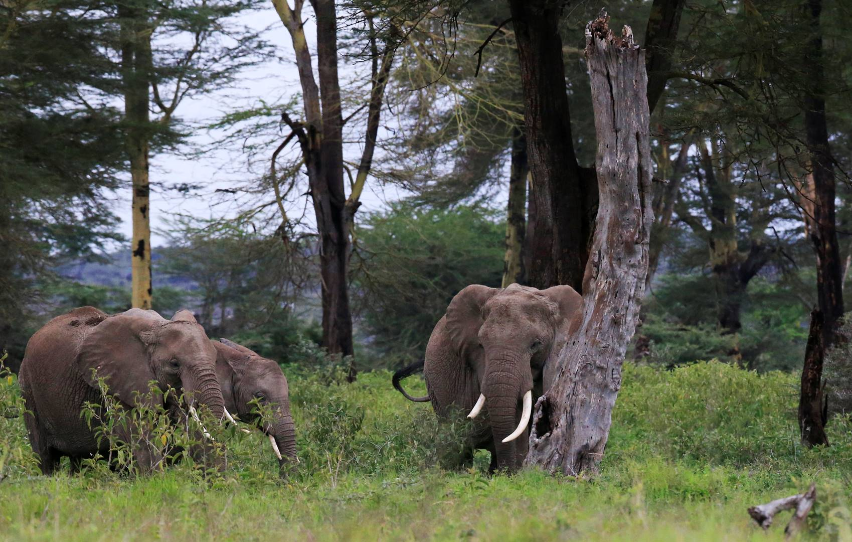 Elephants are seen within the Kimana Sanctuary, part of a crucial wildlife corridor that links the Amboseli National Park to the Chyulu Hills and Tsavo protected areas, within the Amboseli ecosystem in Kimana, Kenya. Picture: Reuters