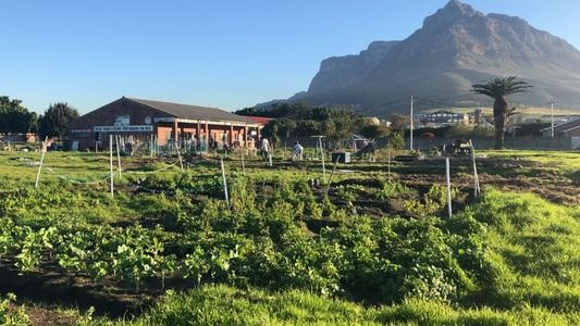 The court battle between the City of Cape Town and residents who have been squatting at the old SA National Circus School in Observatory