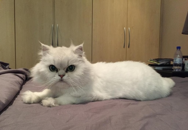 Cat fight! Divorced Durban couple in bitter spate over cat | You