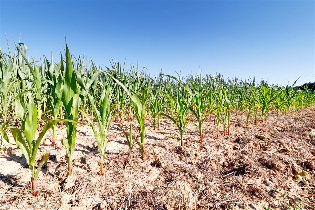 Eastern Cape farmers are fearing the worst as drought conditions continue.