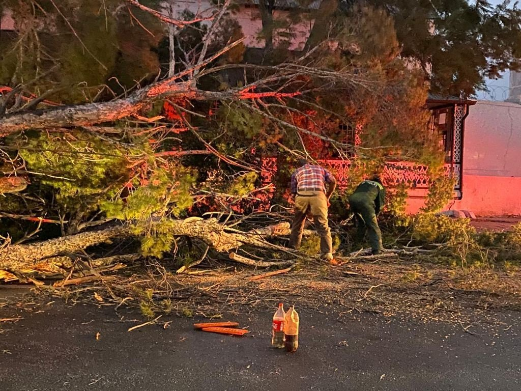 Strong winds uprooted giant trees in Graaff-Reinet