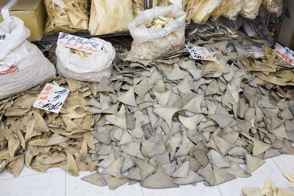 Miljoene haaie word jaarliks vir hul vinne
