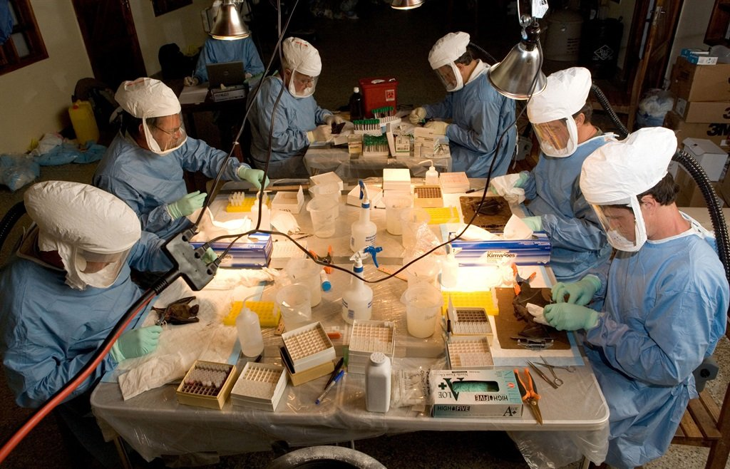 This handout picture given by the World Health Organisation (WHO) shows a scientist team taking blood and organ samples to look for Marburg virus antibodies in bats 15 August, 2007.