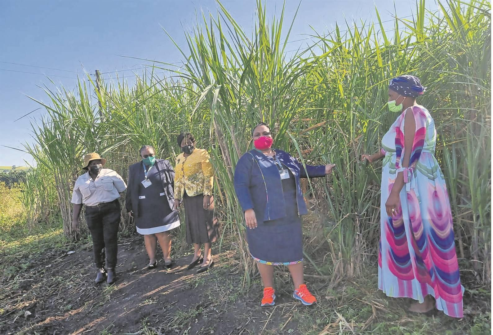 FROM LEFT: Small-scale sugarcane farmer Mbali Shozi, MD of Illovu SA MamongaeMahlare; Bongiwe Sithole-Moloi, KZN MEC for Agriculture and Rural Development; Minister of Agriculture, Land and Rural Development, Thoko Didiza; and small-scale sugarcane farmer Nomanesi Ngcobo.