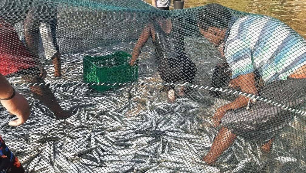 Netting was successful in Pumula Beach on Thursday.