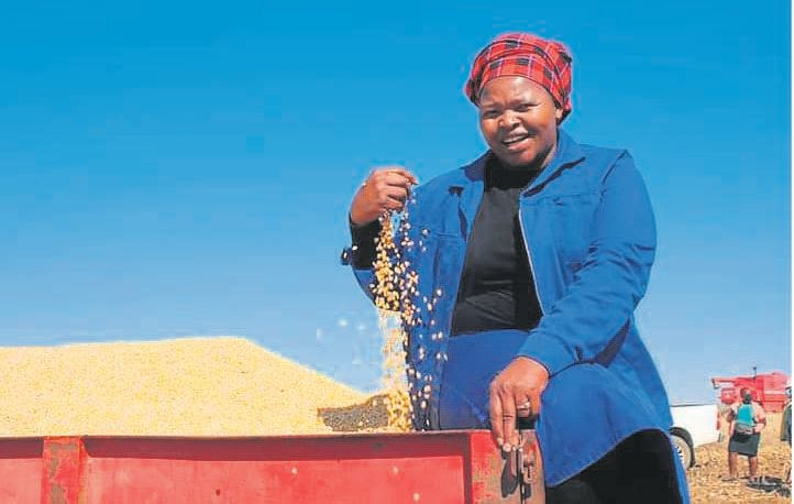 Tsolo grain and vegetable farmer, Zoliwe Nombewu, seen here during the maize harvest on her farm on August 8. Photo:SUPPLIED