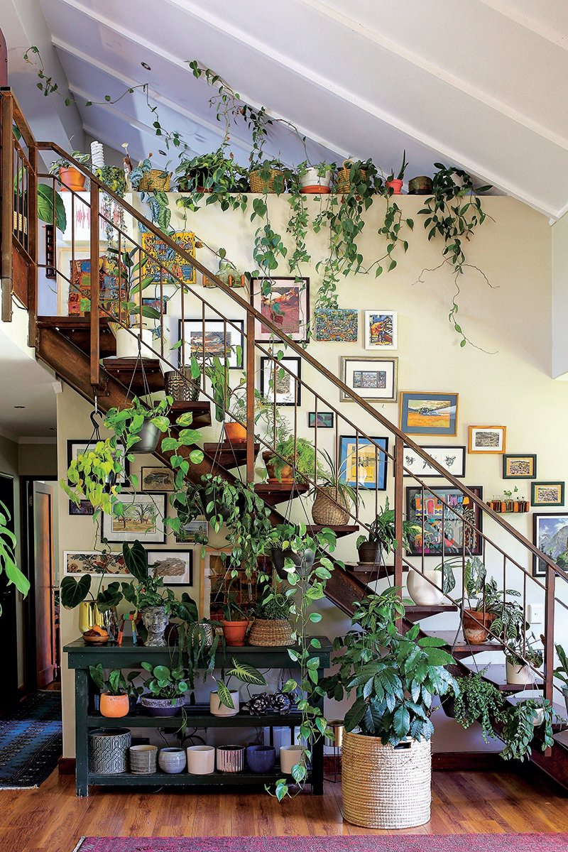 """""""Because plants have so many different growth habits, there are myriad possibilities for styling them,"""" says Saffron. """"I love trailing and climbing plants as they add levels of height that can be difficult to achieve with indoor plants."""""""