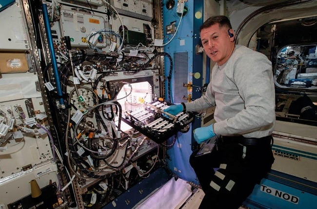 Astronaut Shane Kimbrough tends to the chilli peppers on board the SpaceX rocket. (Photo: Getty Images/Gallo Images)