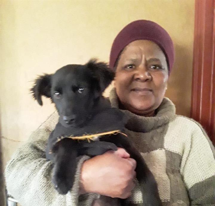 """Silvia Plaatjies, 58, said she """"has no words"""" to express how happy she is that her puppy is feeling and looking so much better after he underwent his treatment to cure the disease."""