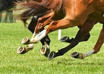 Horse racing   September 21, 2021
