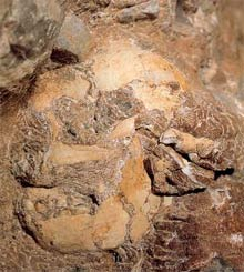 Little Foot as seen in the rocks at Sterkfontein - the most complete homonid skeleton found to date. (Elsabe Brits, Die Burger)
