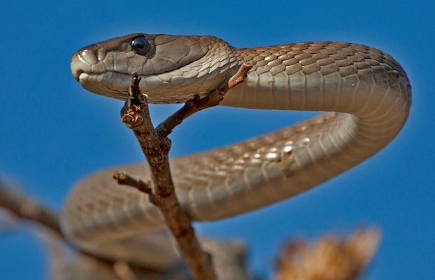 SA snakes and snakebites: a parent's guide | Parent24