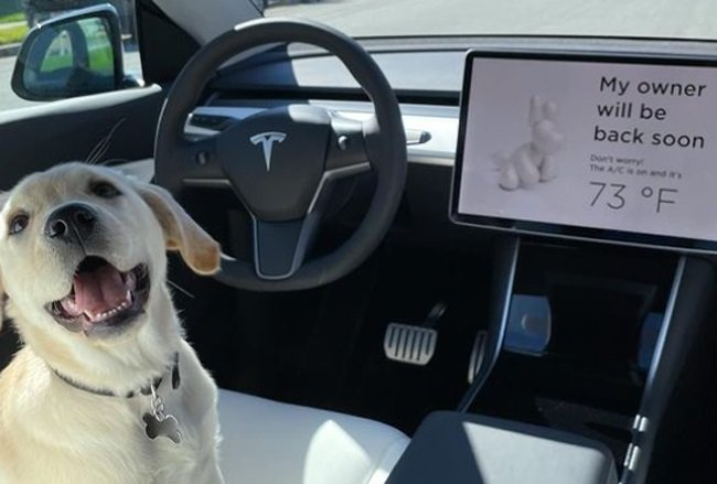 Tesla's Dog Mode feature was introduced two years ago.