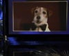 """Dapper in his doggy bowtie, Uggie is the subject of Billy Crystal's """"What the stars are thinking skit"""". Uggie barked when he saw himself on the big sccreen!"""