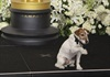 Uggie lives in North Hollywood with his trainer Omar Von Muller, his wife, and his six-year old daughter.
