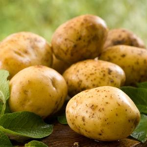 potato tuile