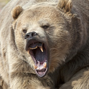 bear attack, Alaska woman attacked by bear