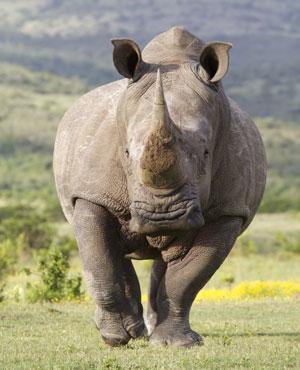 "(Picture: <a href=""http://www.shutterstock.com"">Shutterstock</a>)"