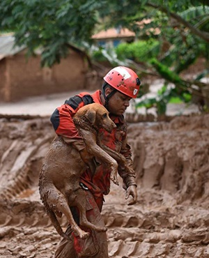 A fireman rescues a dog that was trapped in the mud that swept through the village of Bento Rodrigues in Brazil. (AFP)