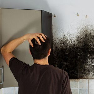 Got allergies? Mould in your home might be the problem | Health24
