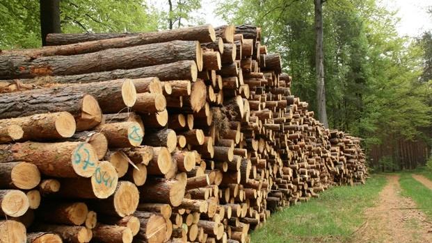 Msunduzi Forestry Company.