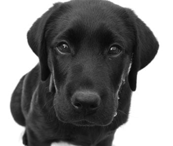 Theophylline For Dogs With Lung Cancer