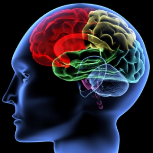 brain dysfunction in criminal behavior Brain dysfunction and behavior brain injuries, chemical imbalances and congenital brain structure can all impact behavior in many criminal cases, neurological systems.