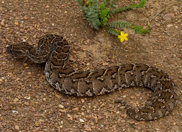 Beware! Snakes and spiders to watch out for | News24