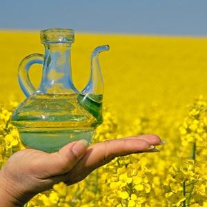 canola,canola oil,omega 3,cooking oils,health,life